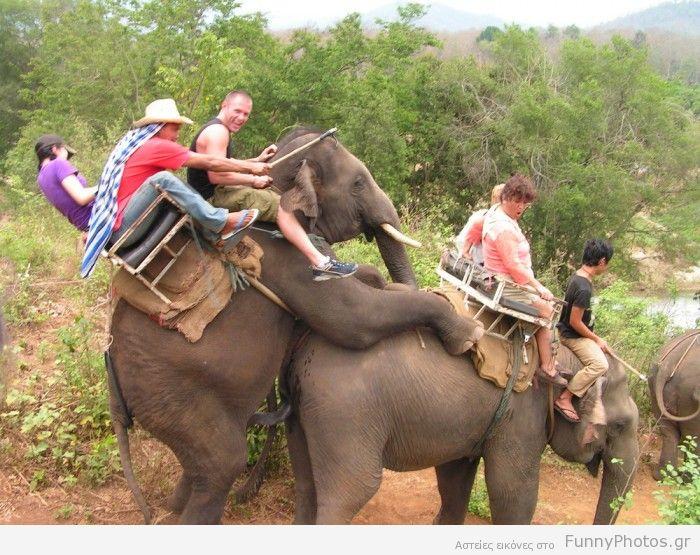 Ελέφαντες κάνουν σεξ