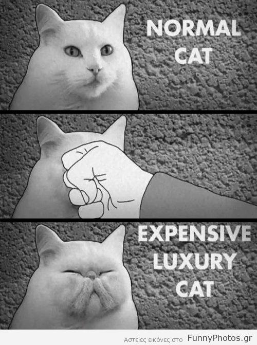 Πως να αποκτήσετε ακριβή γάτα ράτσας